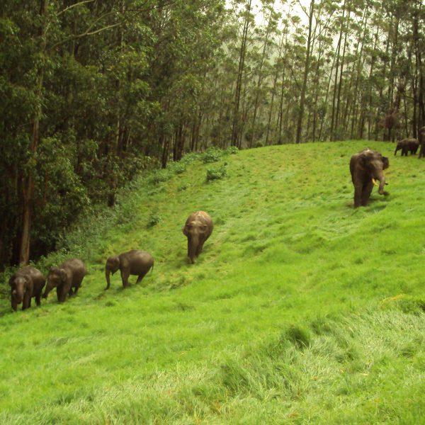 25-Kerala